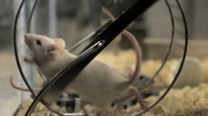 rat-race-300x168